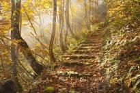 bashos-trail